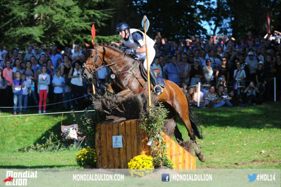Lion d'Angers - Haras national